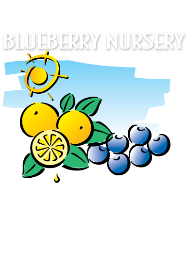 Florida Blueberry Nursery